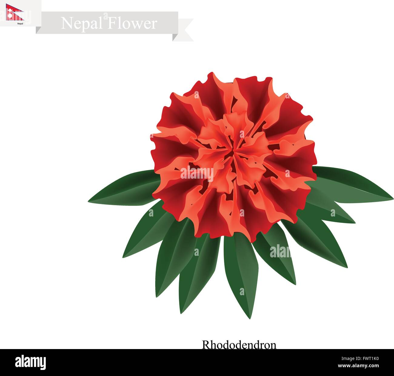 Nepal Flower, Illustration of Red Rhododendron Flowers. The National Flower of Nepal. - Stock Vector