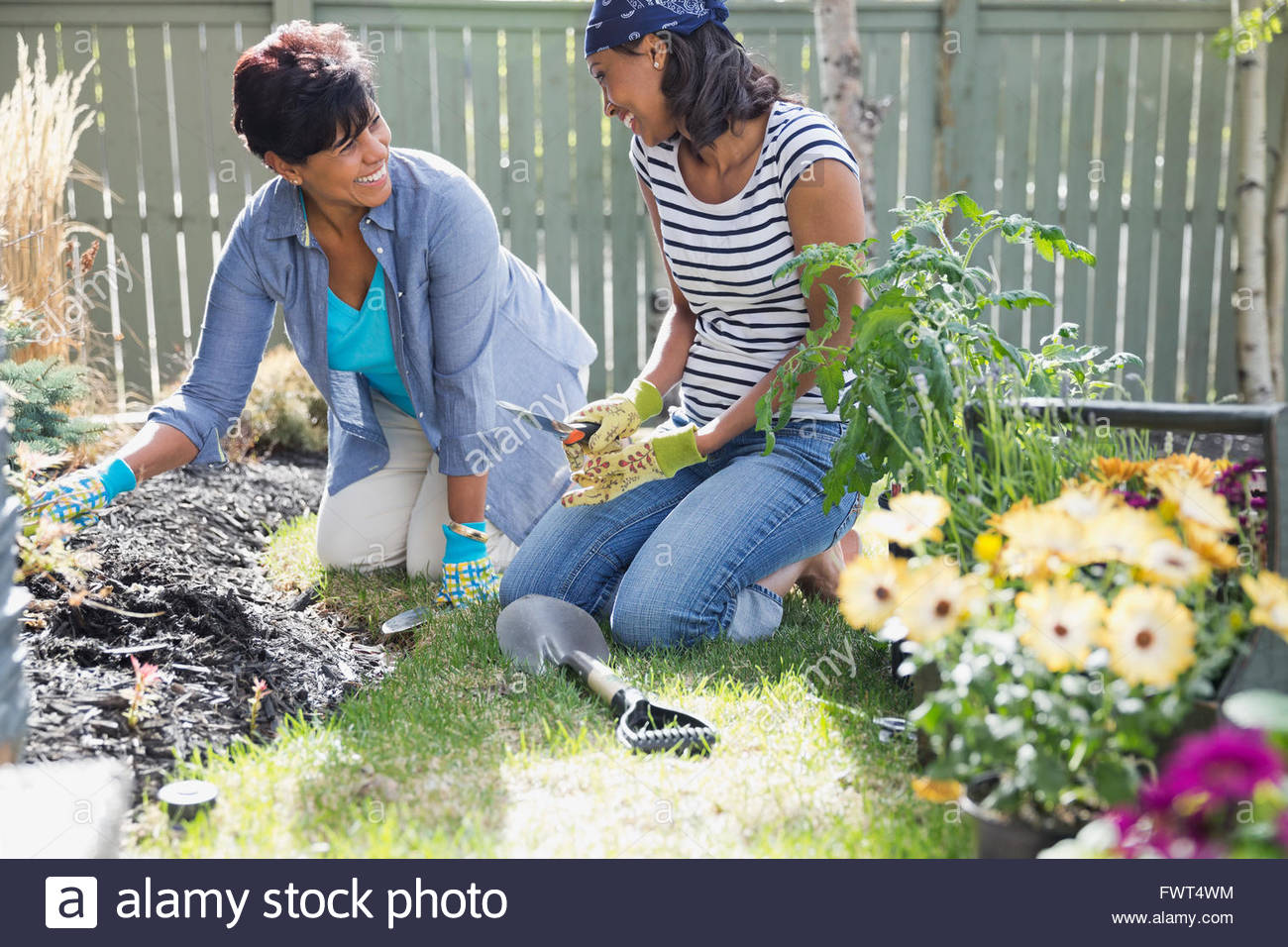 Mother and adult daughter gardening together - Stock Image