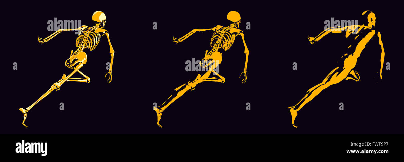 Human Bone Structure Diagram in Orange and Black - Stock Image