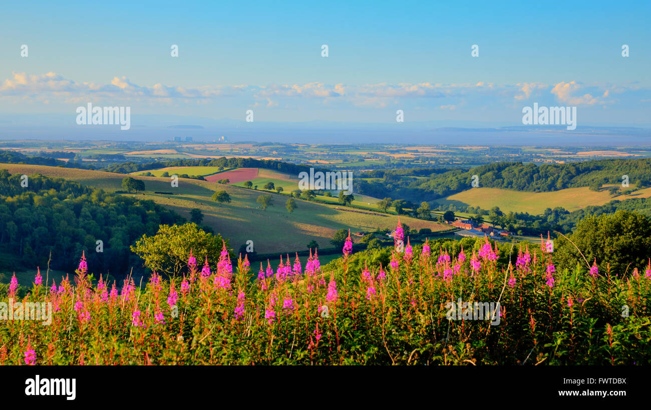Somerset countryside view towards Hinkley Point Nuclear Power station uk - Stock Image