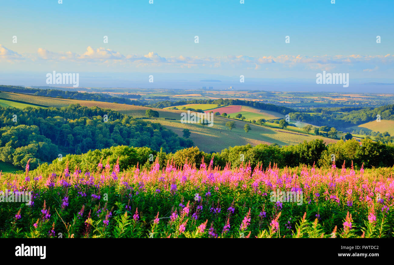 Quantock Hills Somerset countryside views towards Hinkley Point Nuclear Power station and Bristol Channel in summer - Stock Image