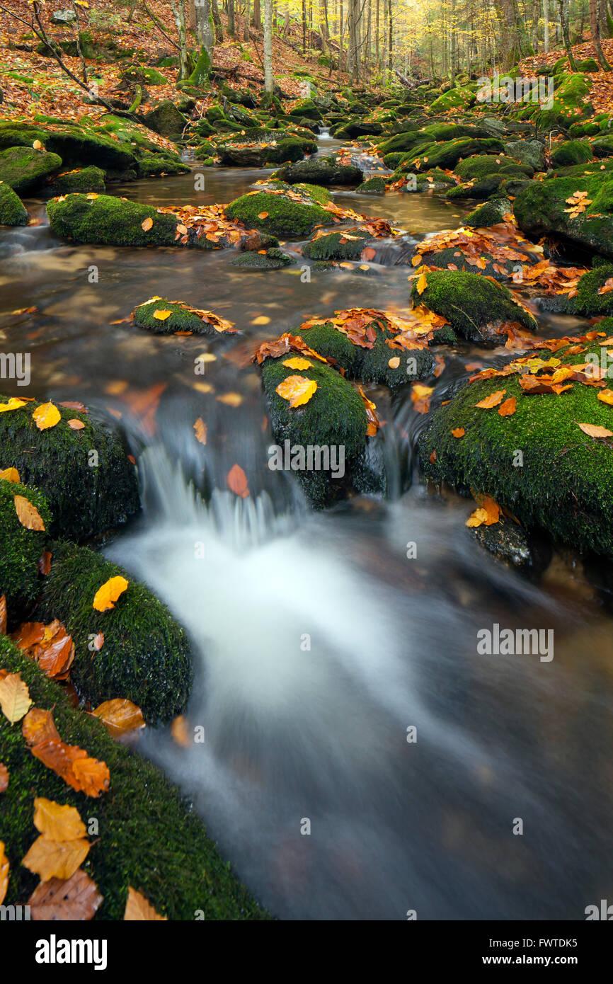 Stream Sagwasser in autumn woodland, Bavarian Forest National Park, Bavaria, Germany - Stock Image