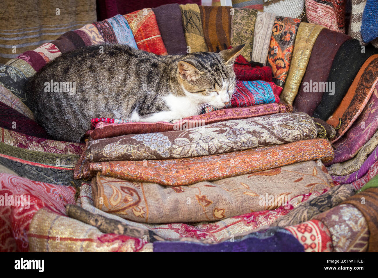 Cat comfortably sleeping in a basket in a fabric shop in Morocco - Stock Image