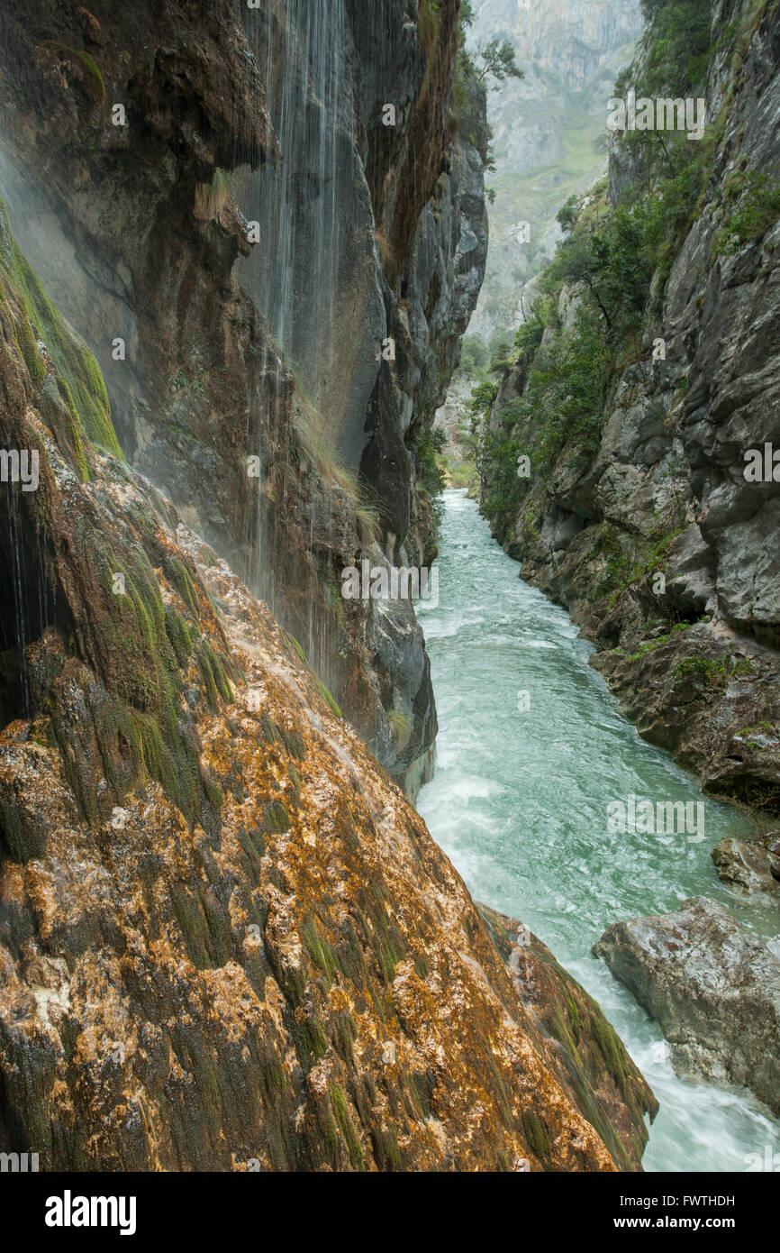Gorge of river Cares, Cain, Leon, Spain. Picos de Europa National Park. - Stock Image