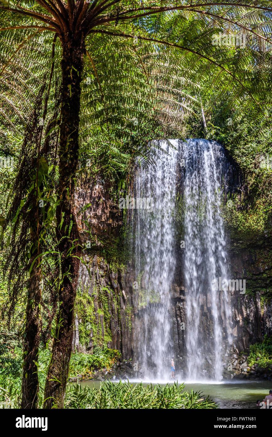 Australia, North Queensland, Atherton Tableland, Millaa Millaa Falls - Stock Image