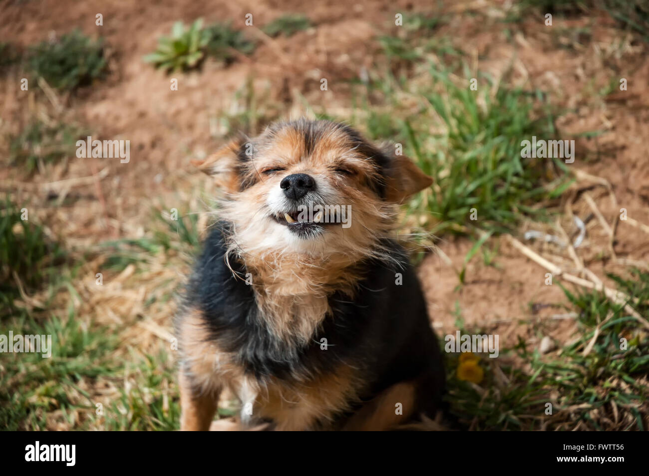Dog taking in the sun #2 - Stock Image