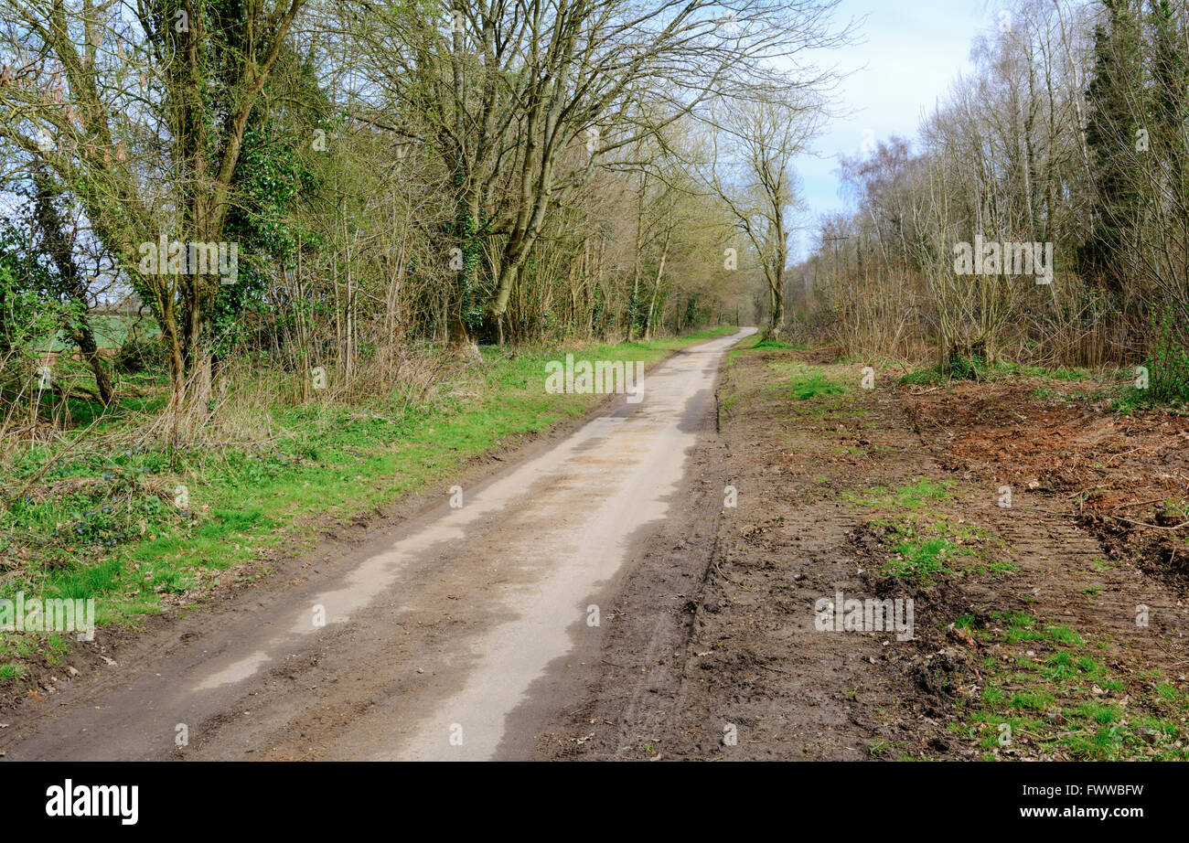 Dirt track road in the countryside with woods either side, in West Sussex, England, UK. Stock Photo