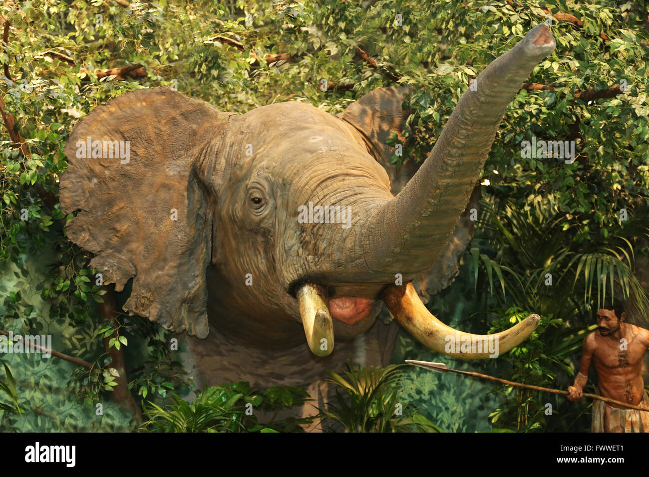 Diorama of african elephant with native hunter - Stock Image