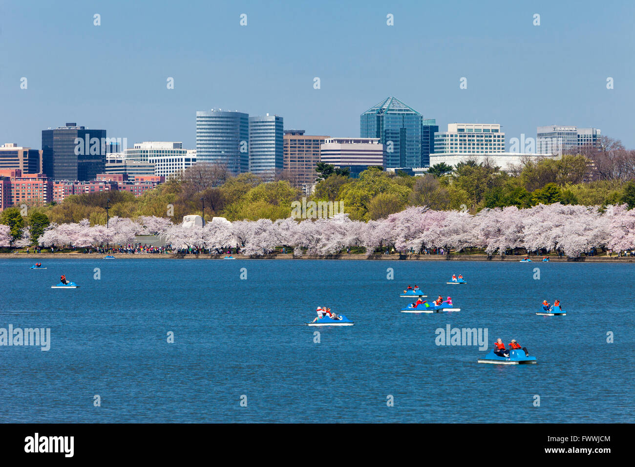 Washington, D.C., Cherry Blossoms.  Paddle-Boating on the Tidal Basin.  Rosslyn, Virginia in Background. - Stock Image