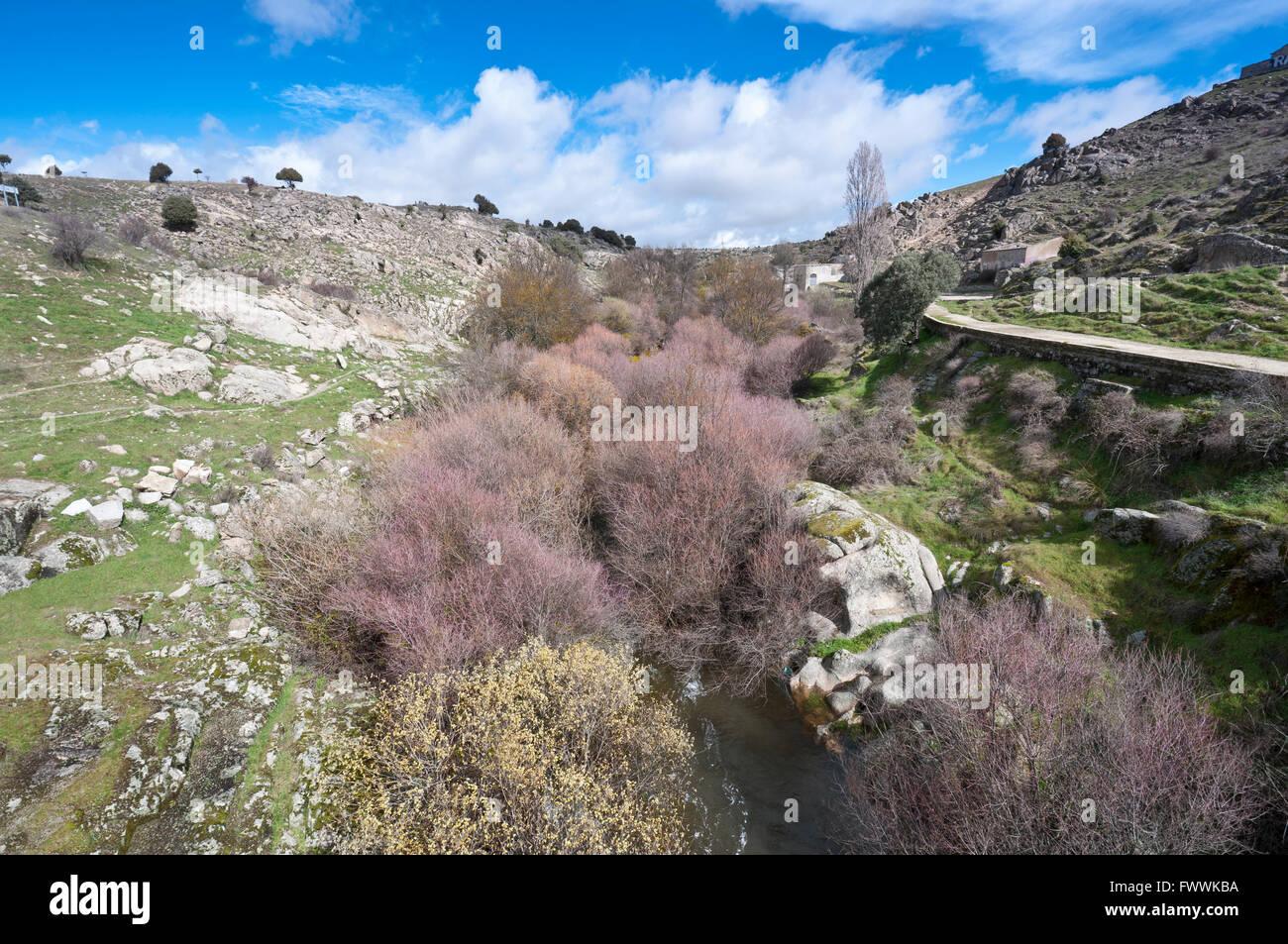 Riparian forest along the river Manzanares, Colmenar Viejo, Madrid, Spain Stock Photo