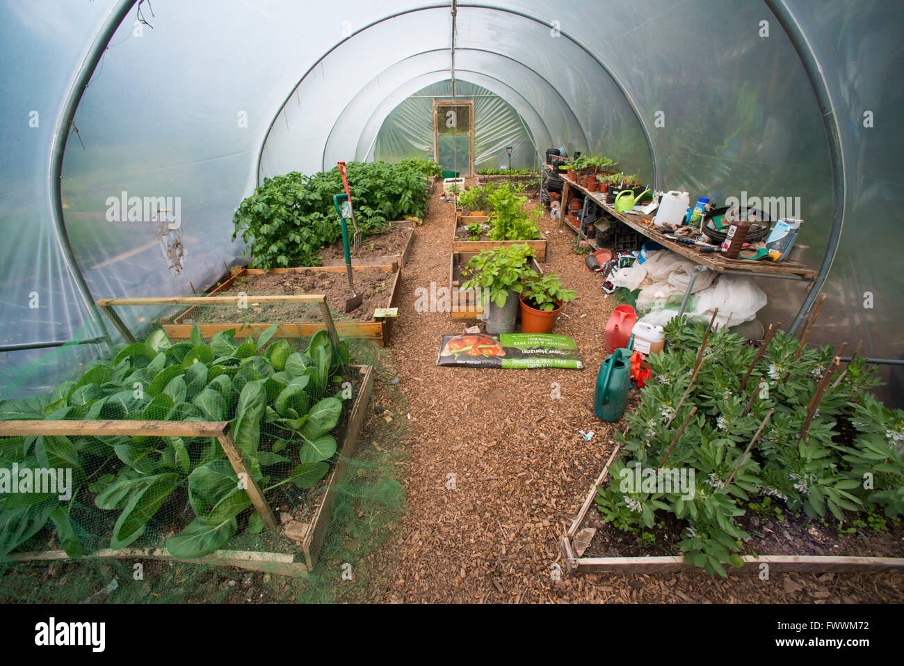 A polytunnel in summer weather, Shropshire, England. - Stock Image