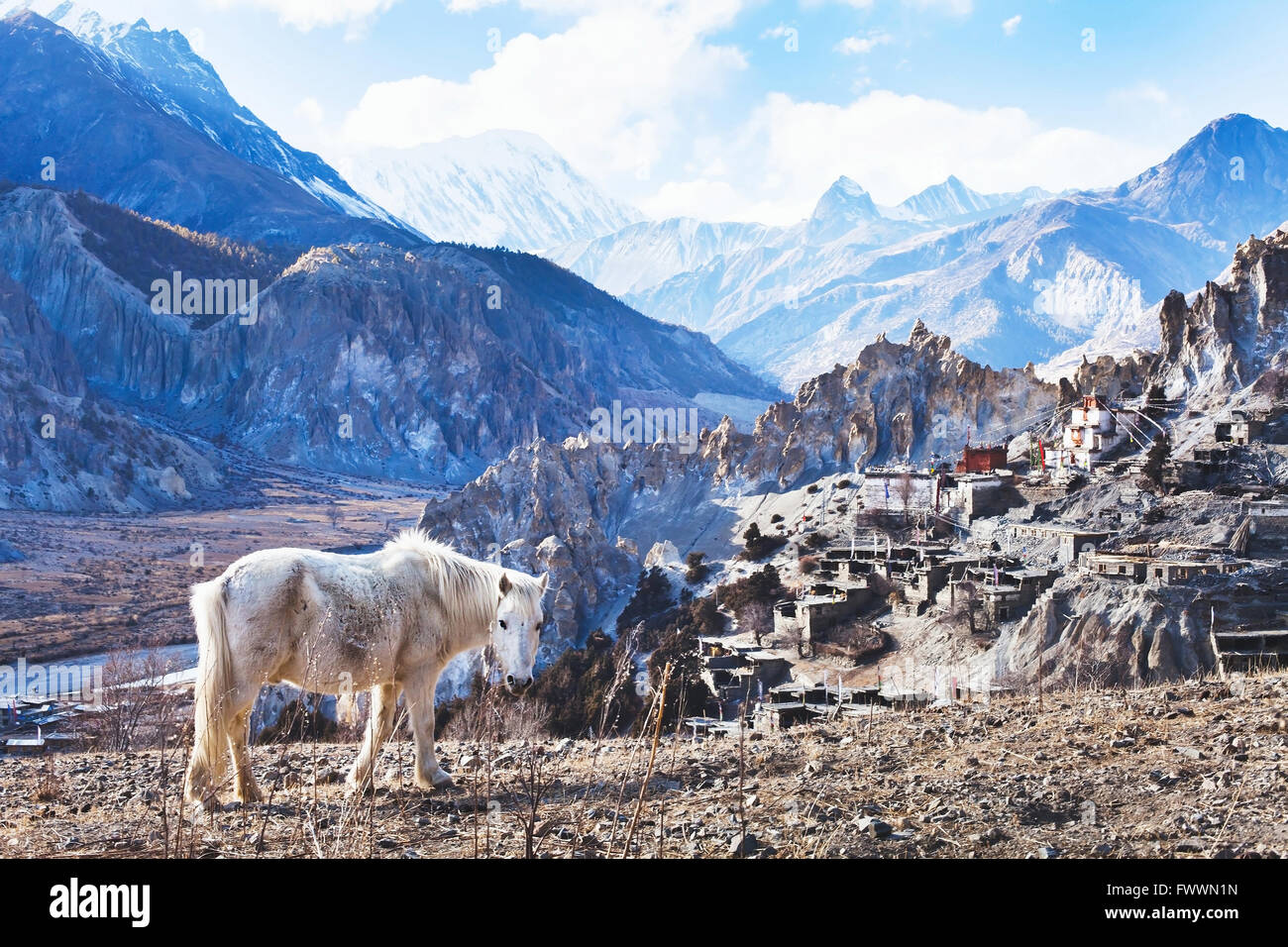 beautiful landscape from Nepal, Tibet, white horse and Himalayan mountains, Annapurna circuit - Stock Image