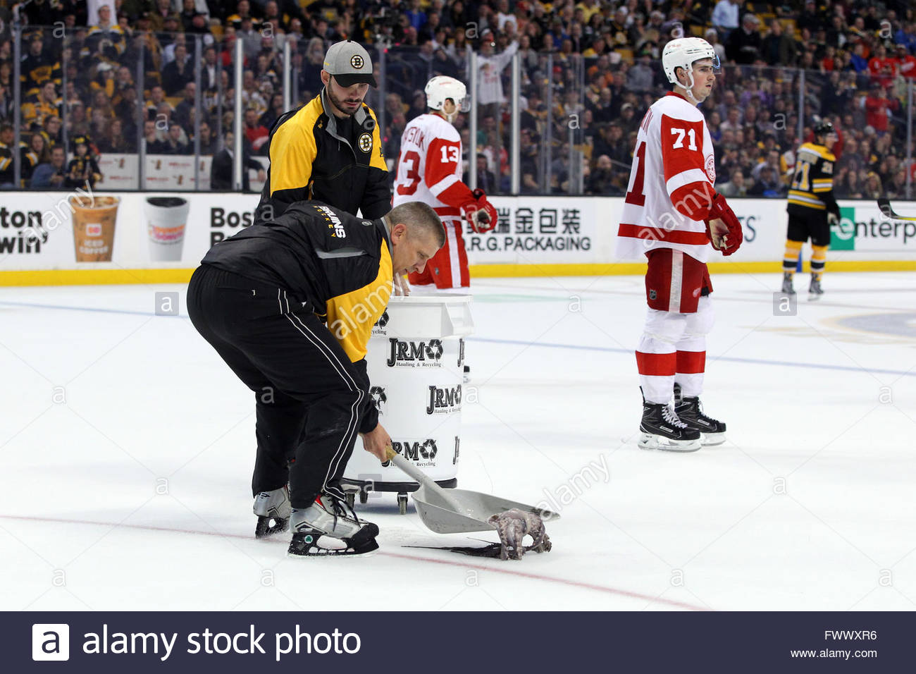 Detroit red wings octopus stock photos detroit red wings octopus boston usa 7th april 2016 a member of the bull crew scoops voltagebd Gallery