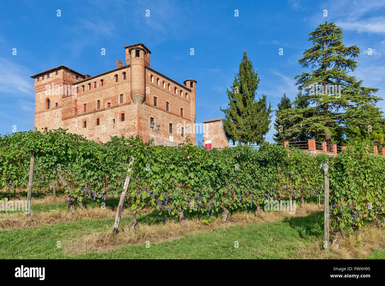 Old medieval castle and green vineyards in Piedmont