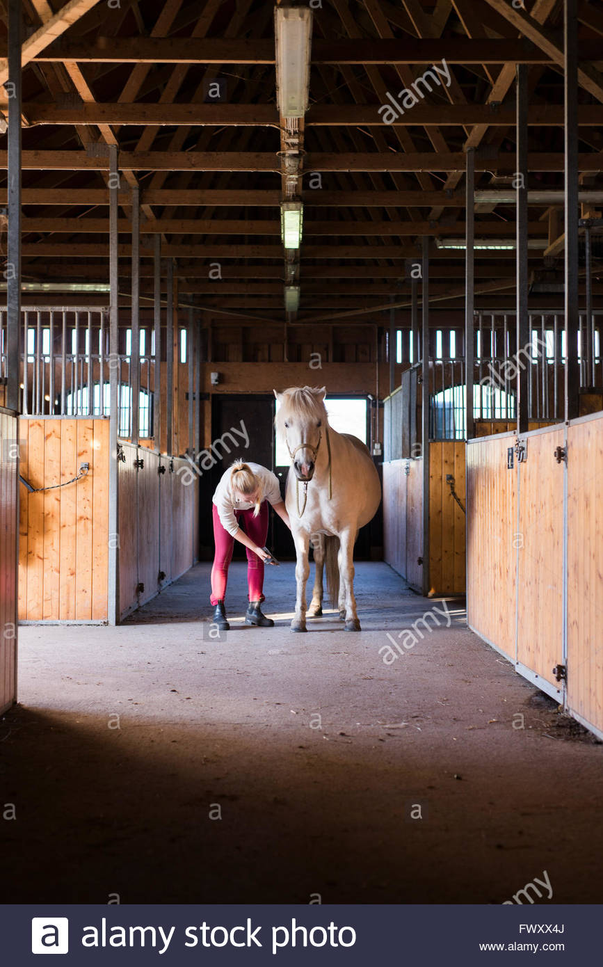 Sweden, Vastra Gotaland, Kungalv, Karna, Woman brushing horse in stable - Stock Image