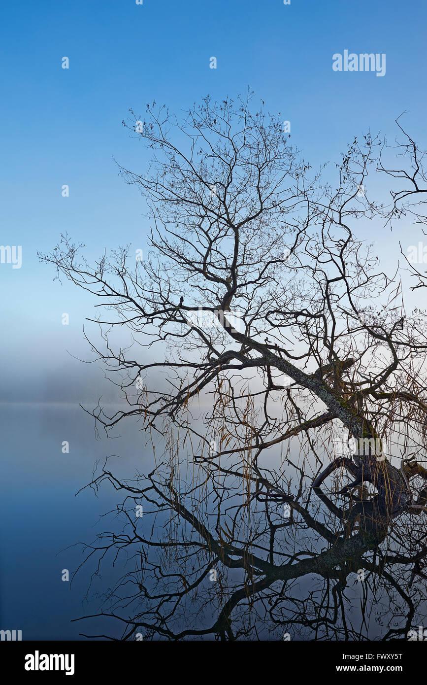 Sweden, Sodermanland, Bornsjon, Willow tree protruding from water - Stock Image