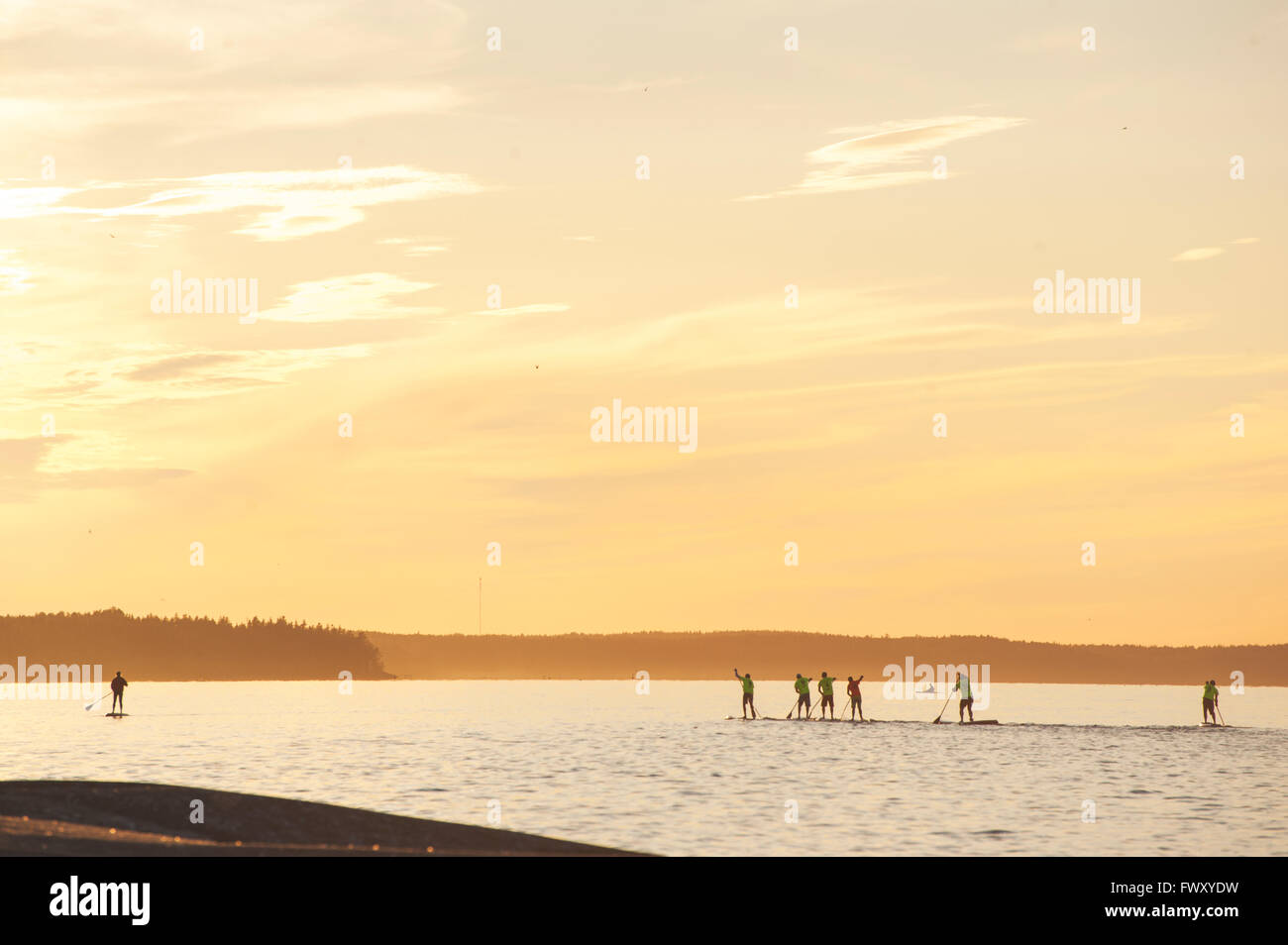Finland, Varsinais-Suomi, Eura, People paddleboarding on lake at sunset - Stock Image