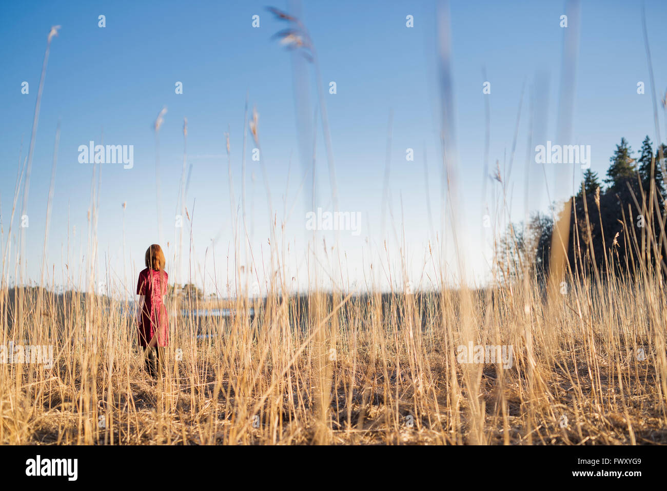 Finland, Varsinais-Suomi, Young woman standing in field in sunlight Stock Photo