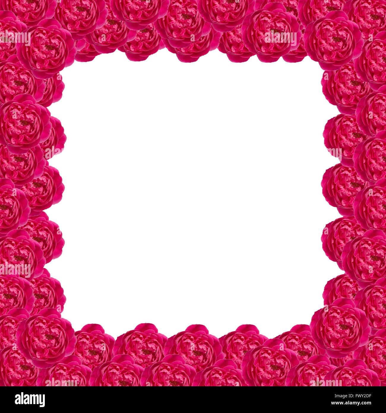 Damask rose frame isolated on white background Stock Photo ...