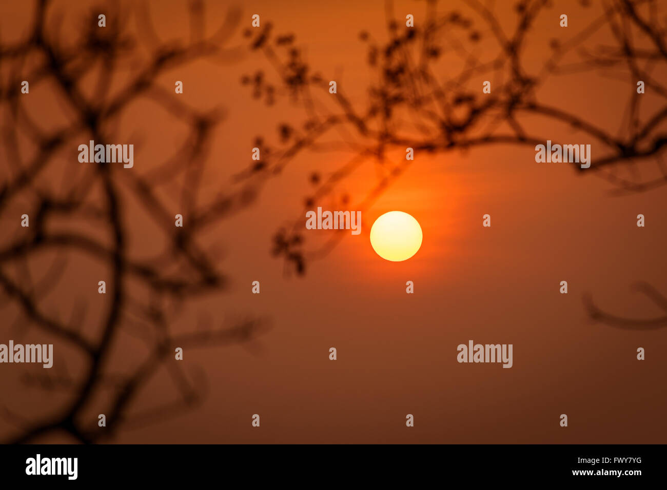 Beautiful sunset with silhouete of Blurred branches.focus on sun - Stock Image