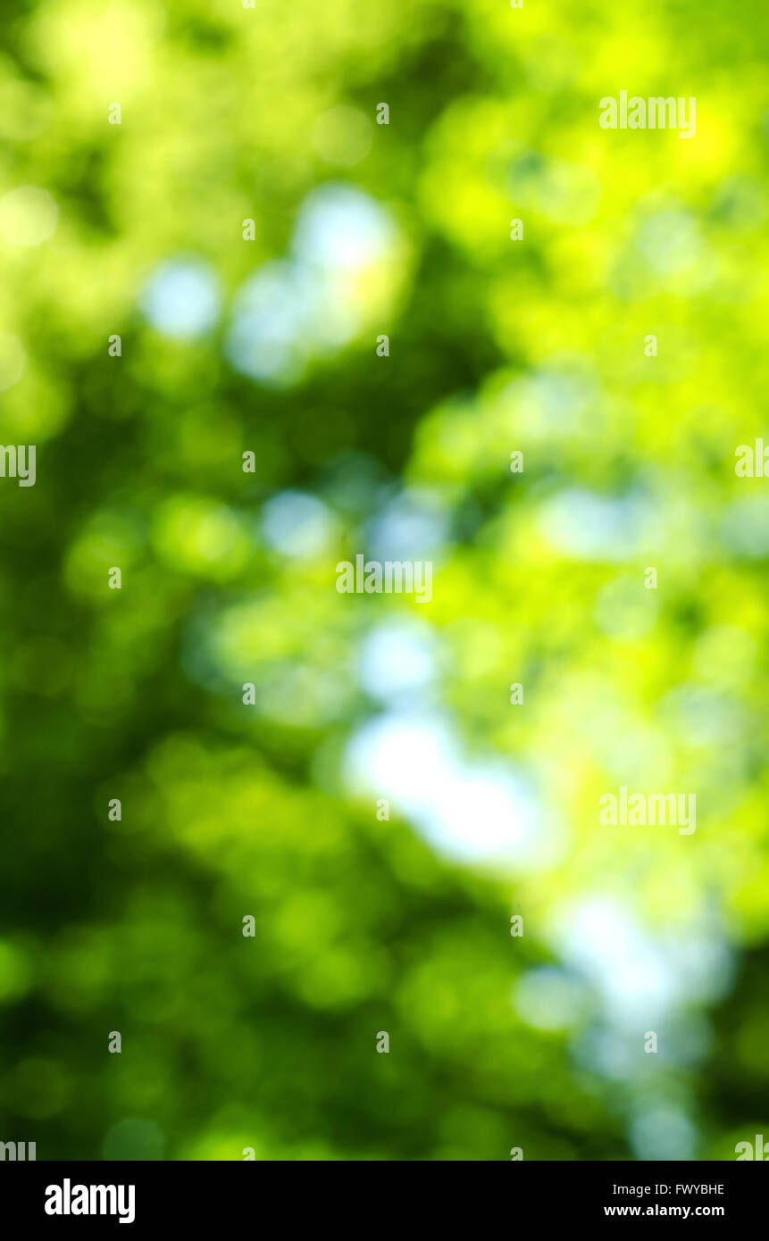 Green blur background of trees and sky Stock Photo ...