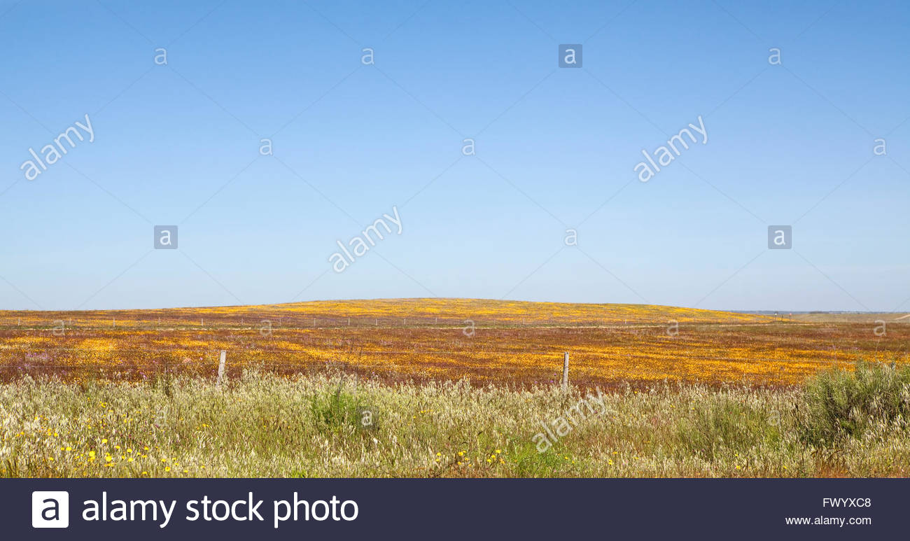 Beautiful Portugal in spring Stock Photo