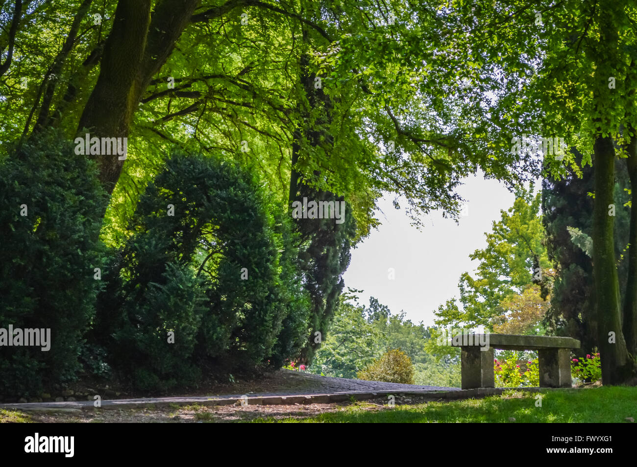 stone bench under the trees in a park - Stock Image