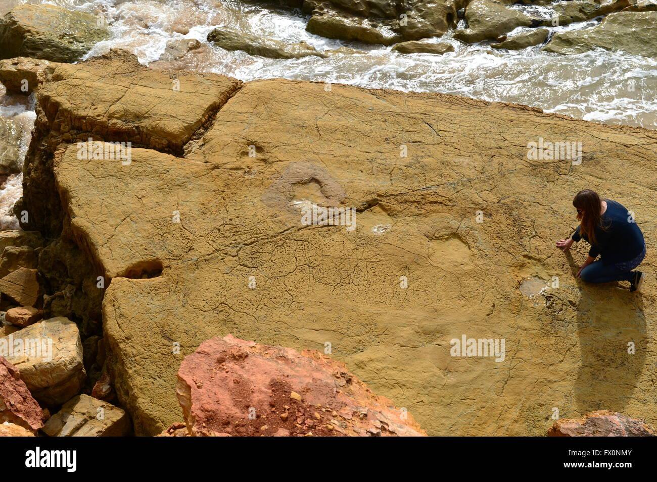 Dinosaur footprints of herbivorous biped or Ornithopod three-toed tridactyl, at Salema on the Algarve Portugal Stock Photo