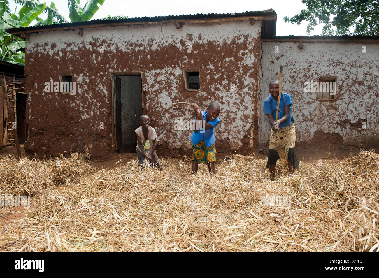 Children threshing crop of beans with sticks, in front yard of their home. Rwanda. - Stock Image