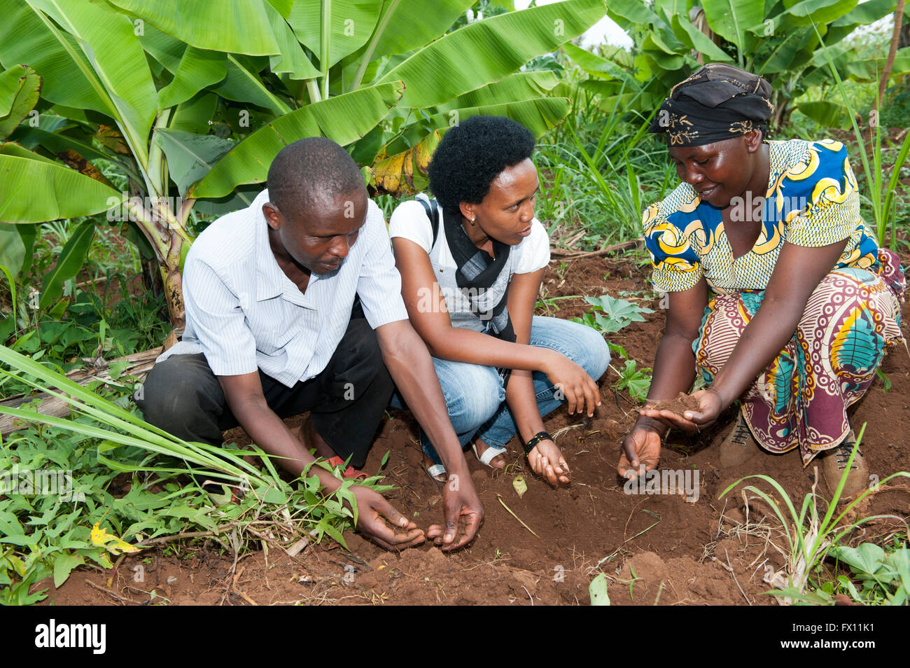 Rwandan agricultural experts looking at soil with a local farmer and discussing how to improve it. Rwanda. - Stock Image
