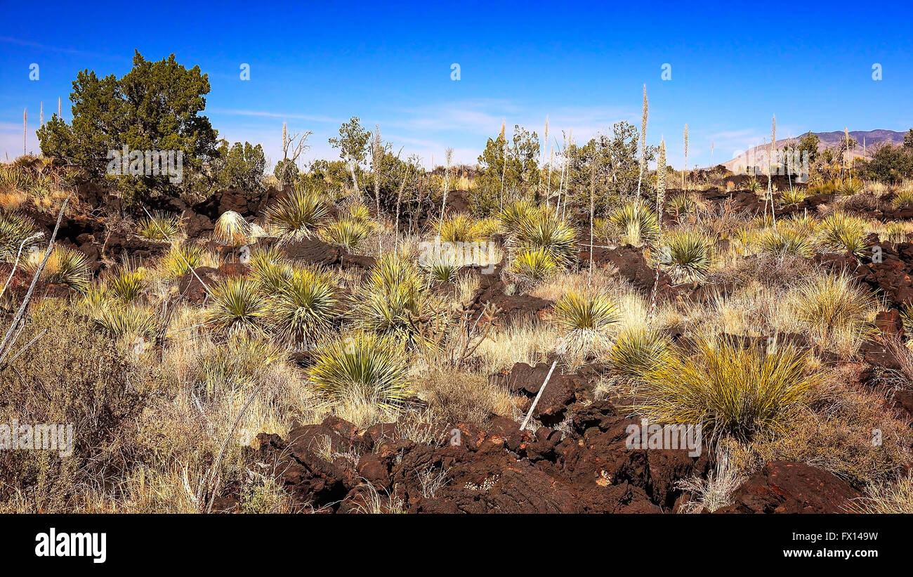 Lush lava landscape at Valley of Fires Recreation Area in New Mexico - Stock Image