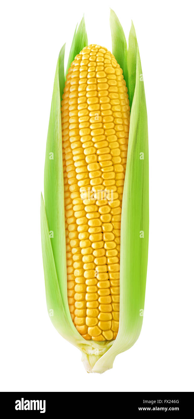 One corn with leaves isolated on white background with clipping path - Stock Image
