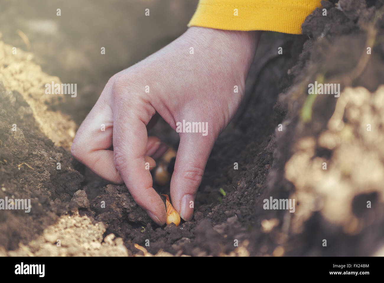 Woman seeding onions in organic vegetable garden, close up of hand planting seeds in arable soil. - Stock Image
