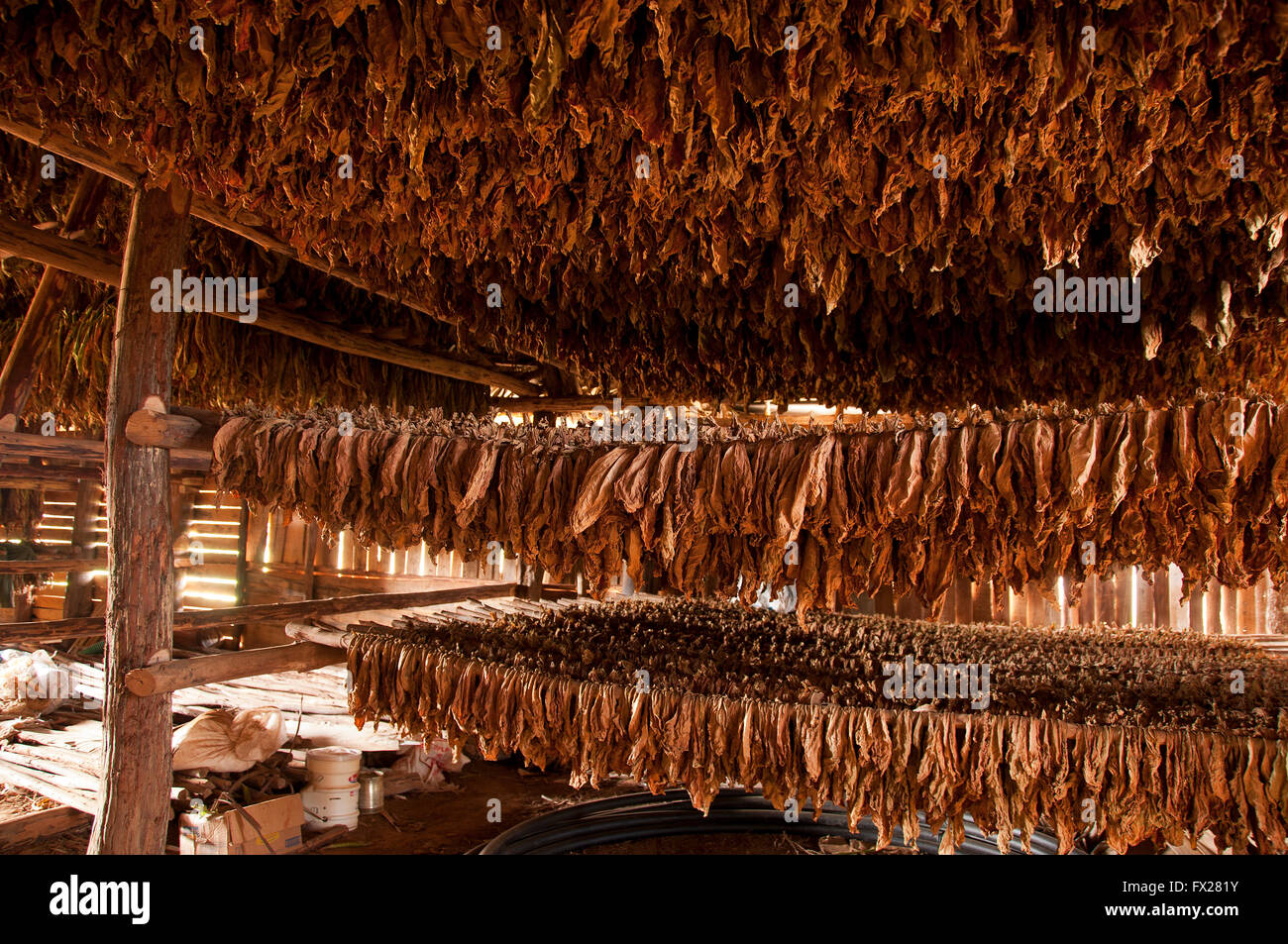 Barn for drying of tobacco, Vinales, Cuba - Stock Image