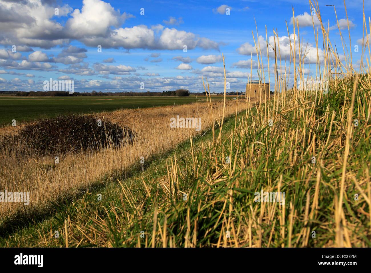 Marshland landscape on flat between Bawdsey and Alderton, Suffolk, England, UK from coastal defence dyke wall Stock Photo