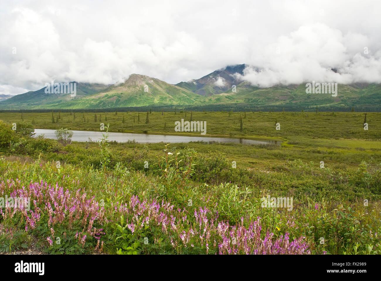 Tranquil Alaska view,  Alaska, USA, - Stock Image