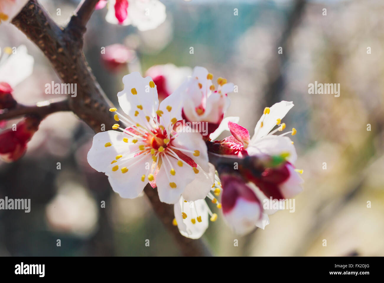 Flower Header Stock Photos Flower Header Stock Images Page 2 Alamy