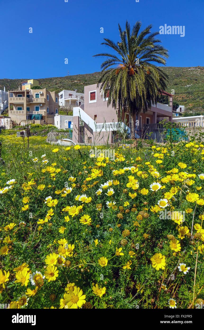 Yellow daisy flowers blue sky and palm trees, Emborios, Kalymnos, Greece - Stock Image