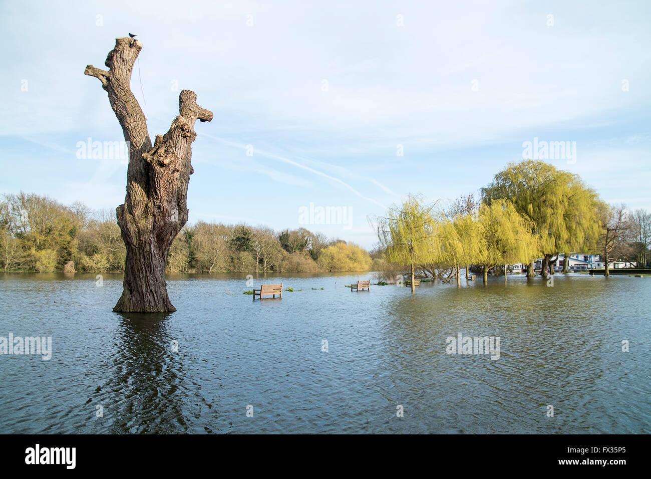 High Tide in Radnor Gardens Twickenham - Stock Image