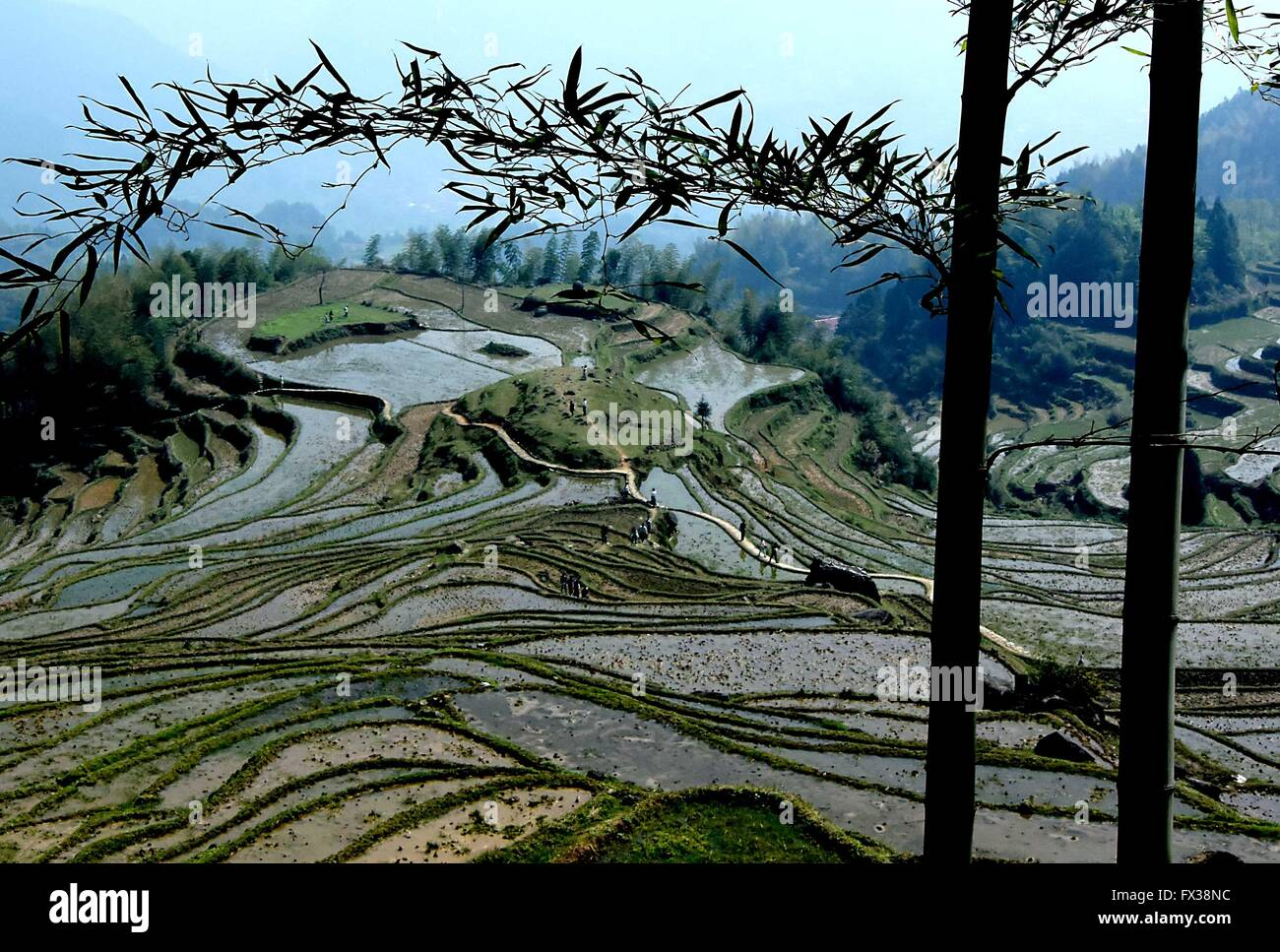 Beijing, China. 5th Apr, 2015. Photo taken on April 5, 2015 shows the terraced fields in Yunhe County, east China's - Stock Image