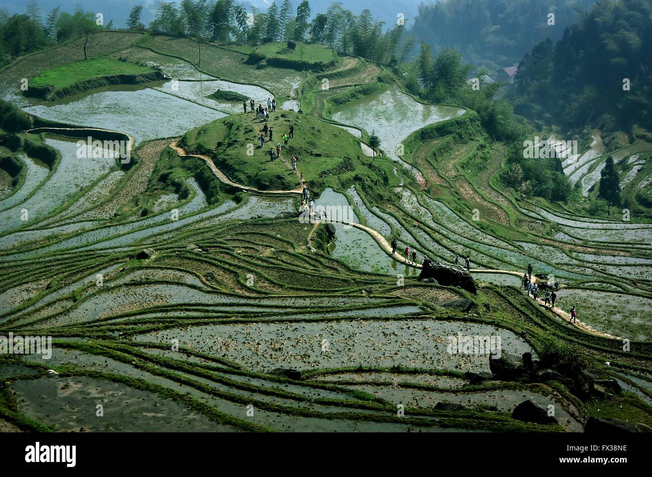 Beijing, China's Zhejiang Province. 5th Apr, 2015. Tourists walk on the terraced fields in Yunhe County, east - Stock Image