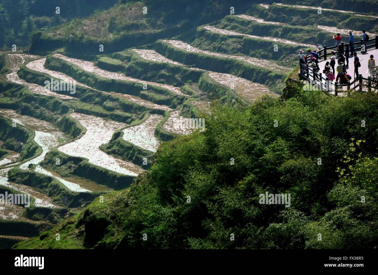 Beijing, China's Zhejiang Province. 5th Apr, 2015. Tourists visit the terraced fields in Yunhe County, east - Stock Image