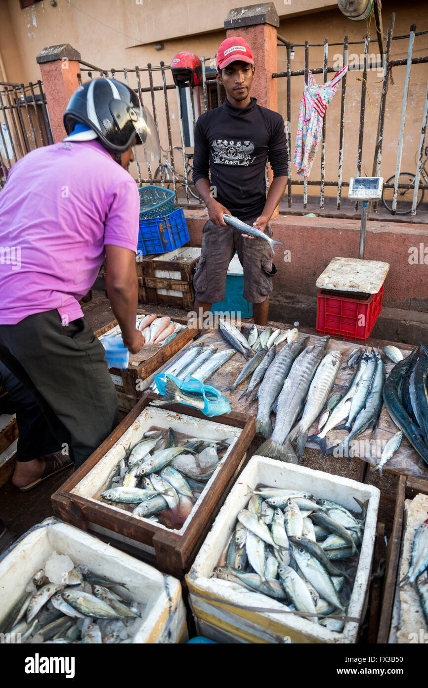 Fish for sale at Negombo fish market (Lellama fish market), Negombo, Sri Lanka, Asia - Stock Image