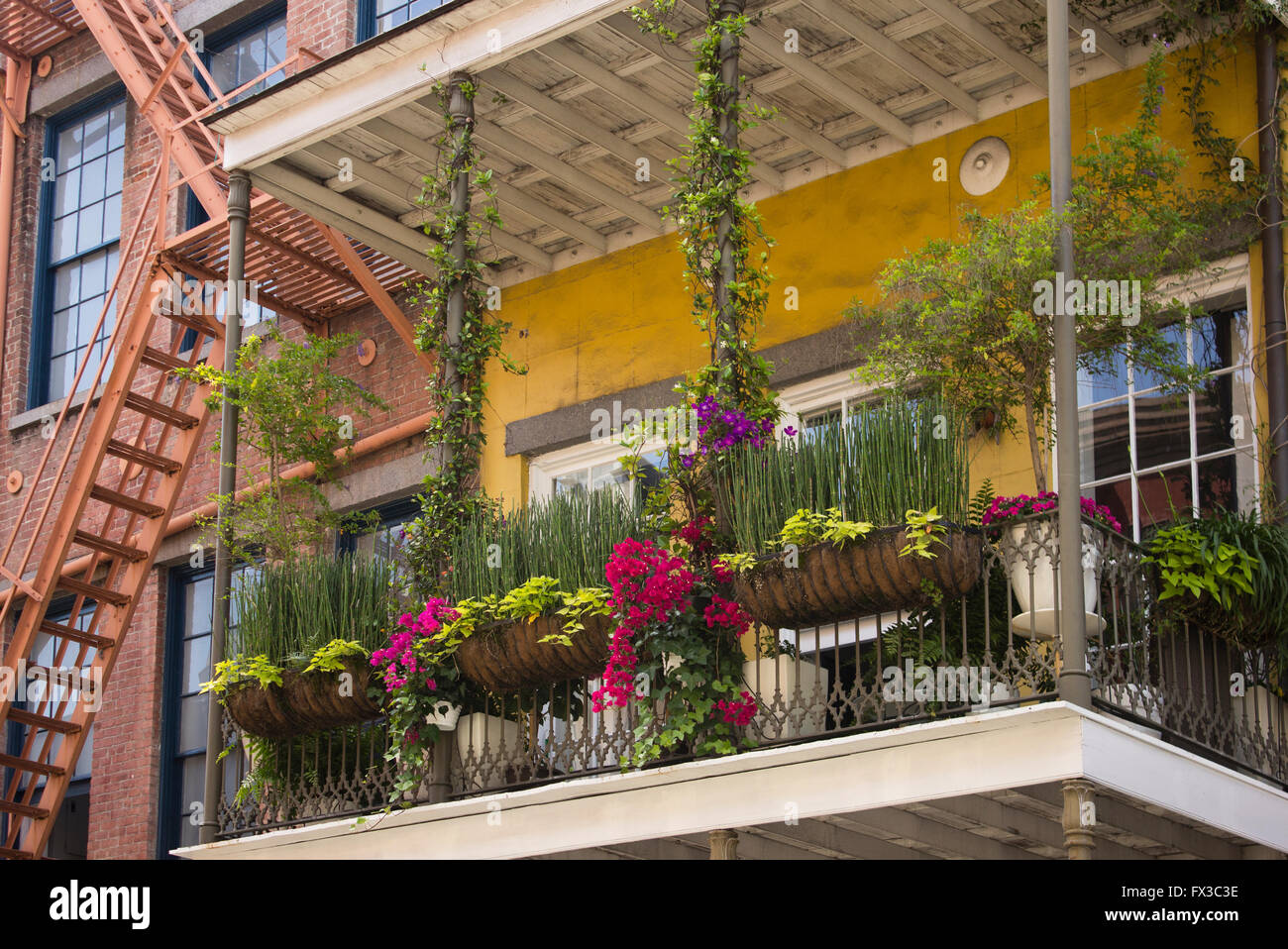 French Quarter balcony with lush gardens, New Orleans, LA, USA Stock ...