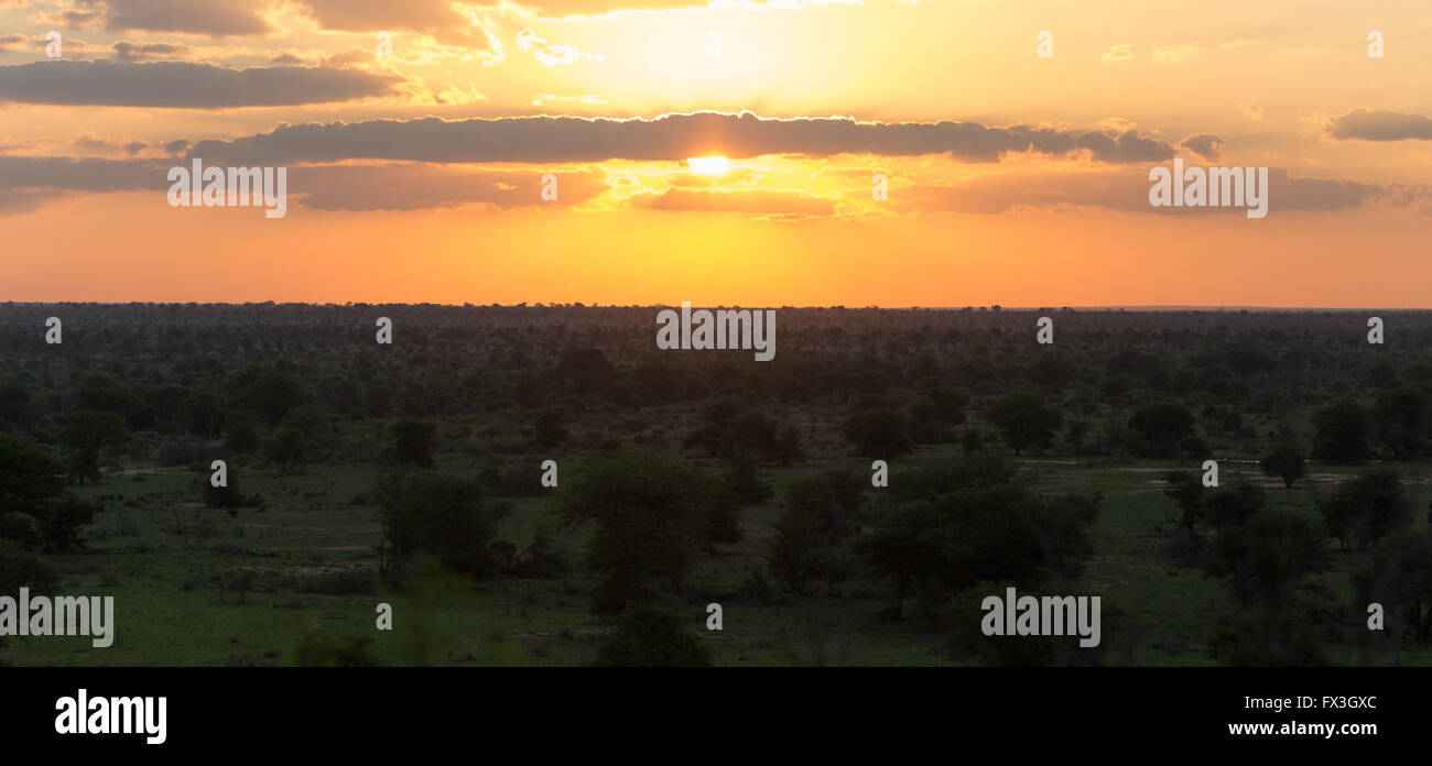 Beautiful orange glow of the bushveld as the sun goes down in Kruger National Park, South Africa - Stock Image