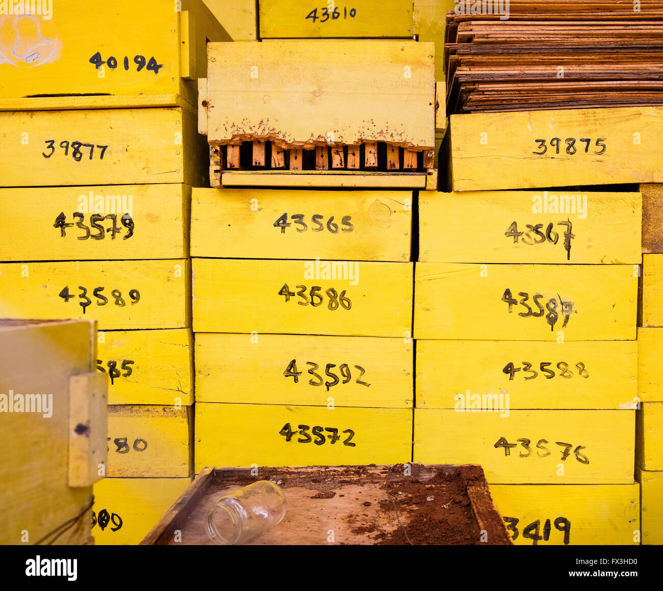 Number coded yellow painted beehives used to make beehive fences to deter elephants from raiding farm crops in southern - Stock Image