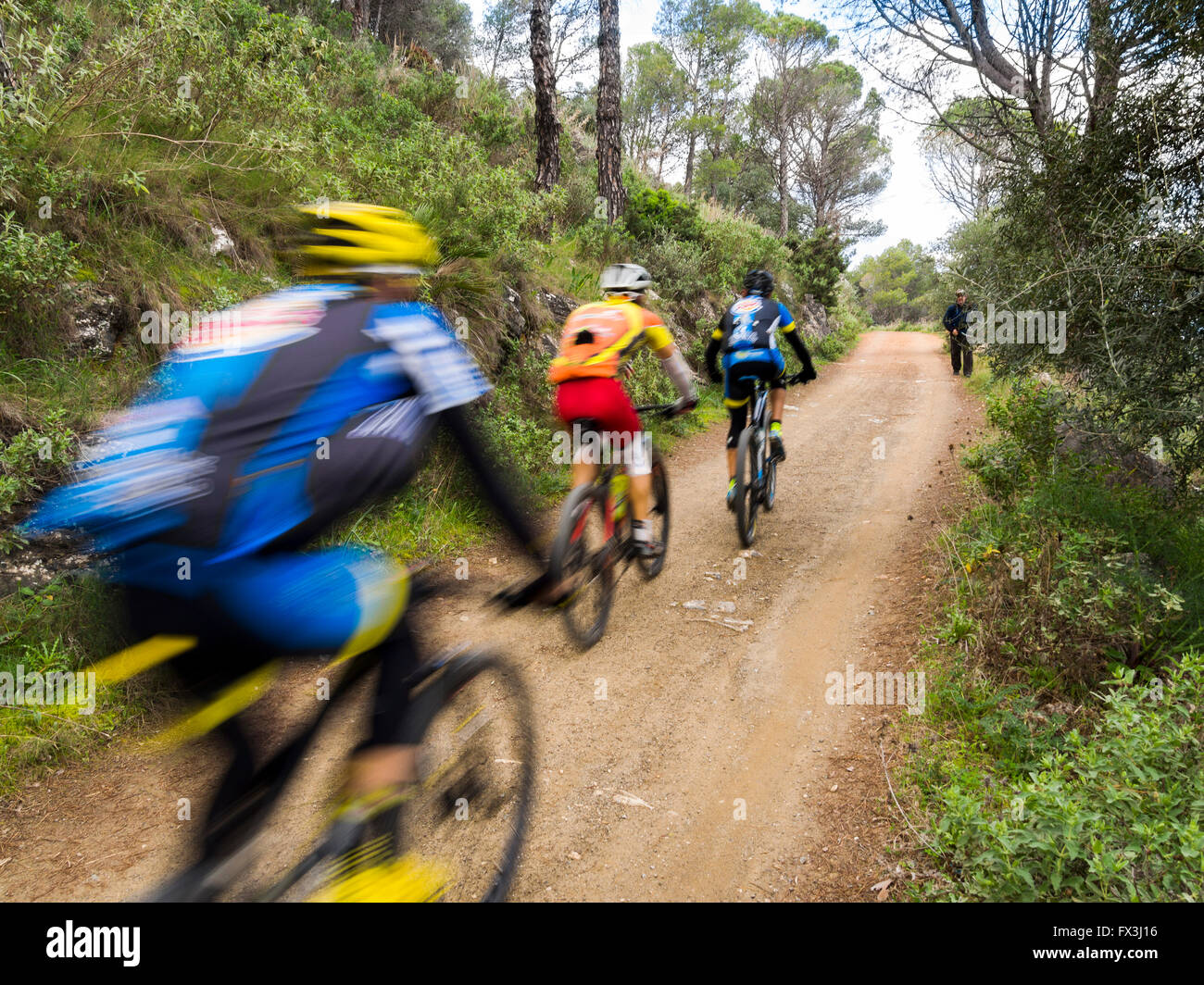 Mountain bike. Cyclists along a forest path at Sierra de Mijas forest. Malaga province Costa del Sol, Andalusia, - Stock Image