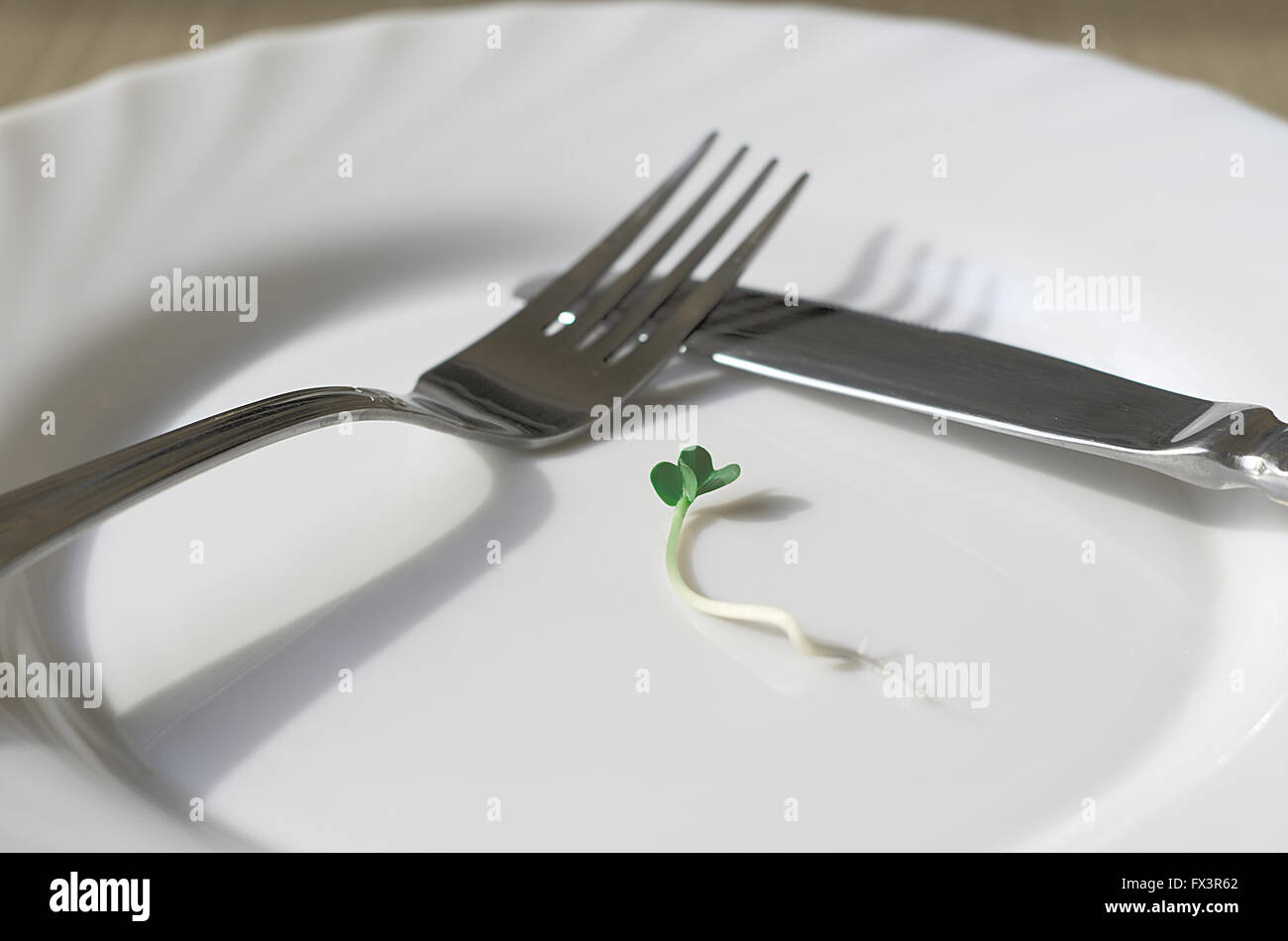 Lonely green sprout on a dish - Stock Image