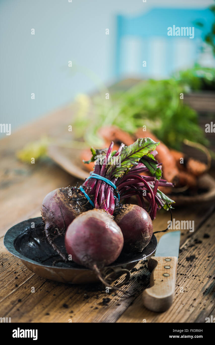 Fresh whole beetroot from garden soil, on wooden farmhouse table in kitchen Stock Photo