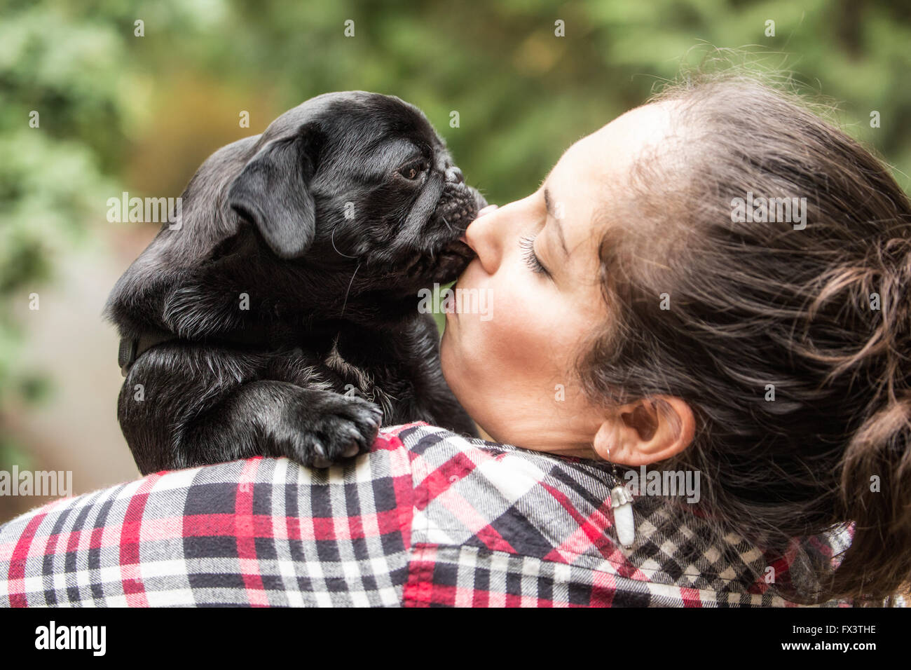 Kato, a black Pug puppy giving his owner a doggy kiss, in Issaquah, Washington, USA - Stock Image